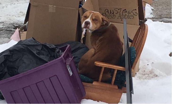 Ollie-Loo, jak nazwano psiaka, zbudował sobie własną budę! Naznosił kartonów,...