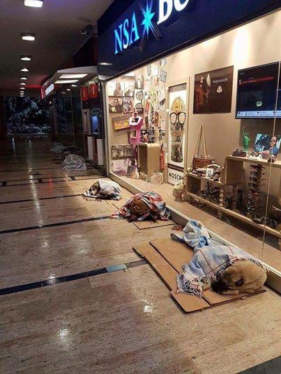W tureckim Stambule wiedzą, jak dbać o bezpańskie zwierzęta! Pracownicy...
