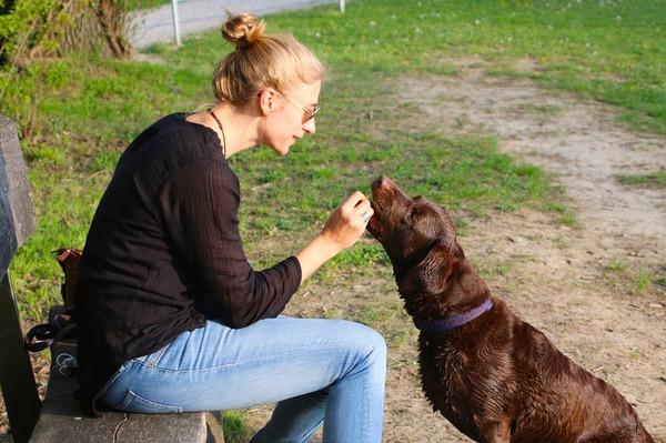 Niezależnie od tego co mówisz zwierzęta wydają się nas słuchać (lub...