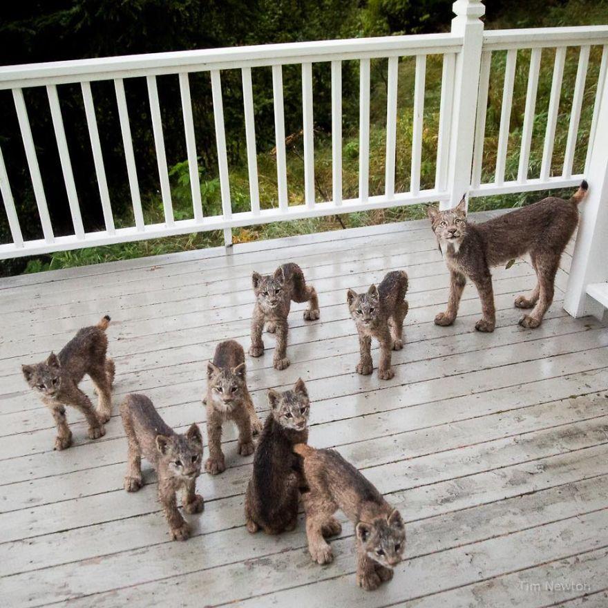 Pewnego ranka, Tima obudziły dziwne dźwięki dochodzące z tarasu. Kiedy...