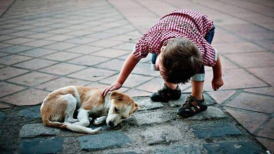 Znalezione obrazy dla zapytania bezpanskie psy