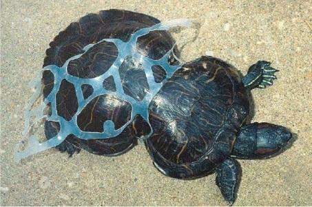 1. Nawet najmniejszy, porzucony przez nas na plaży śmieć stanowi zagrożenie dla