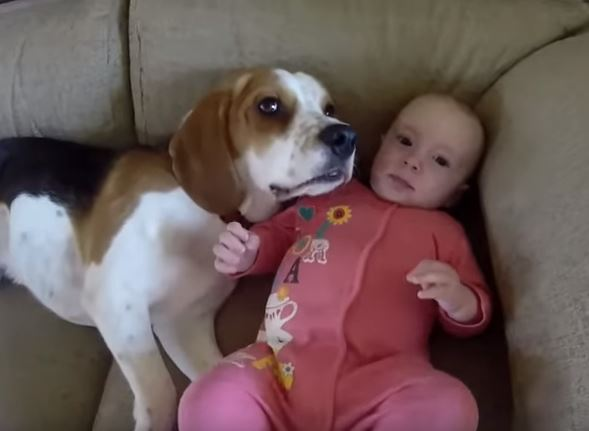 Pierwsze spotkanie Laury i Charliego miało miejsce gdy tylko dziewczynka się uro