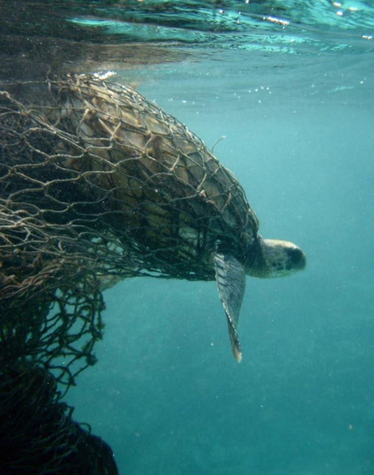 13. Śmieci niszczą środowisko naturalne zwierząt oraz wywołują choroby.