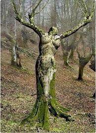 16. Jeśli chcecie zobaczyć jeszcze ciekawsze drzewa, przejdźcie dalej!