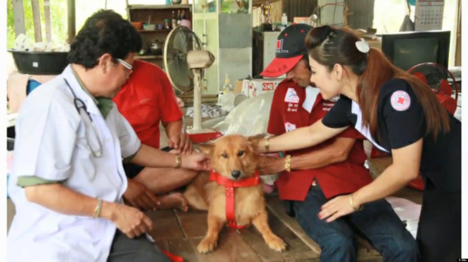 Zdjęcie Pui który zasłużył na bycie w centrum uwagi. Pies otrzymał medal oraz...