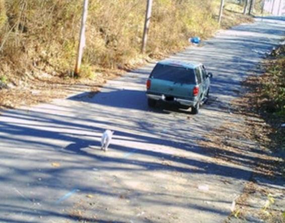 Następnie widać jak najzwyczajniej w świecie odjeżdża zostawiając psa w tyle.
