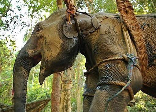 Następnym razem gdy zobaczysz słonia na którym można jeździć, albo...