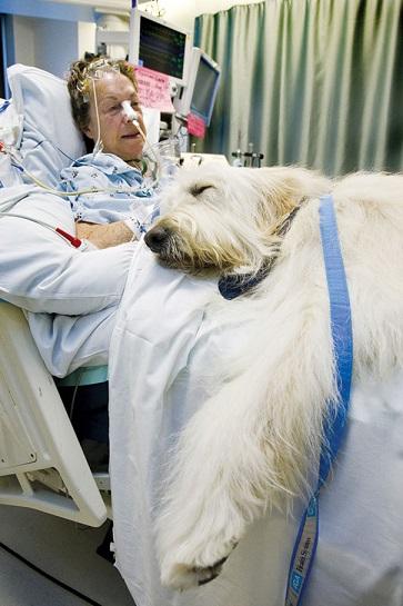 Zwierzęta mogą wejść do szpitala raz w tygodniu na godzinę, a tuż przed...