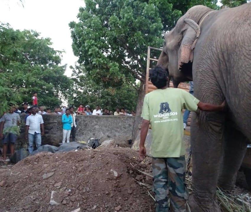 Słonie, tygrysy, lwy i niedźwiedzie muszą przejść wyczerpującą, często...