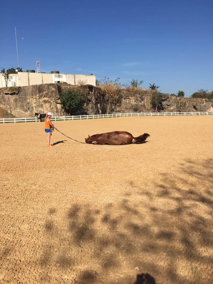 Głowa konia zaczęła puchnąć. Dostał też wysokiej gorączki.