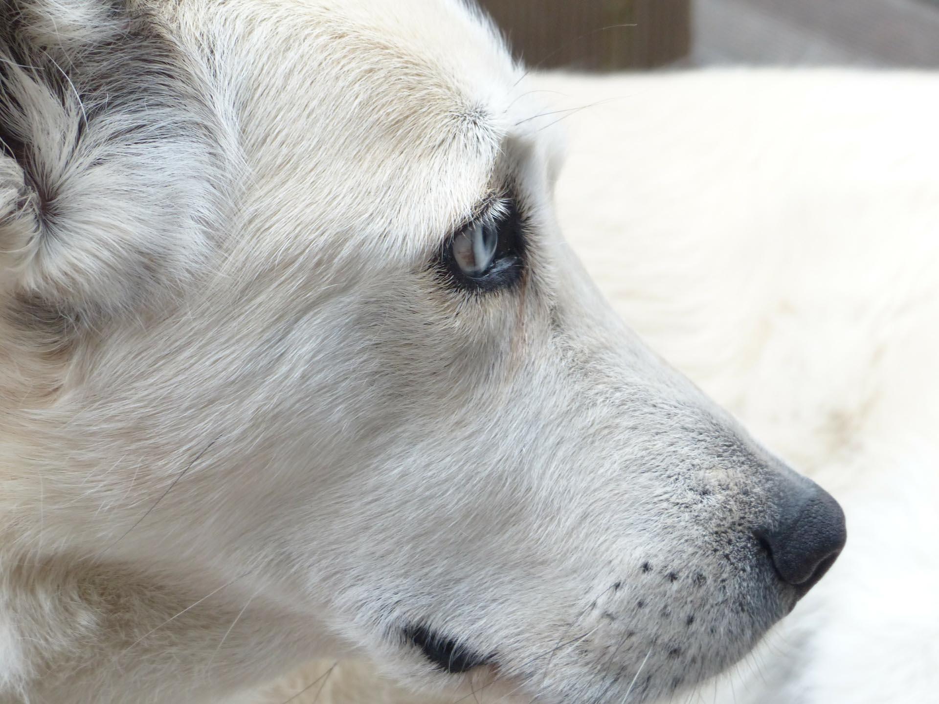 <b>Sylwestrowa noc jest wyjątkowo trudna dla zwierząt domowych, bezdomnych i...