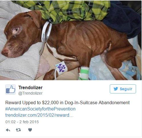 Stan trzyletniego psa był opłakany... Weterynarze wątpili, czy uda się go...
