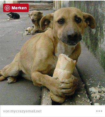 Starszy pan zobaczył małego chłopca karmiącego wychudzonego, brudnego psa....