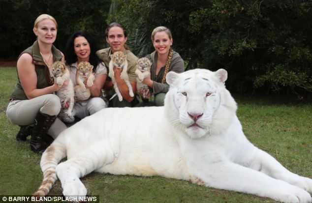 Yeti, Odlin, Sampson i Apollo przyszli na świat w rezerwacie dla zwierząt w...