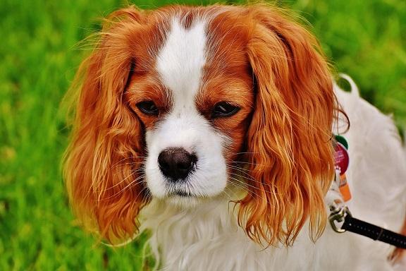 Ciekawe jest to, że psy, które wzięły udział w eksperymencie, nie zmieniały swoj
