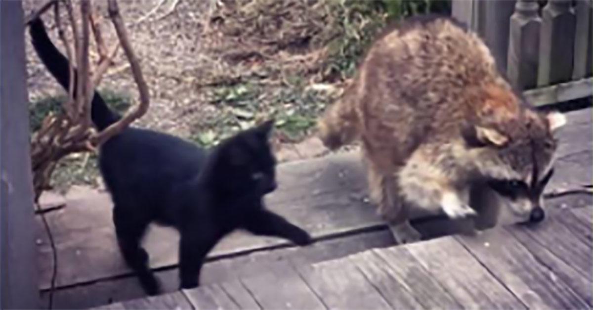 Mowa o dwóch bezpańskich kotkach, które najwyraźniej uznały, że chodzenie krok w