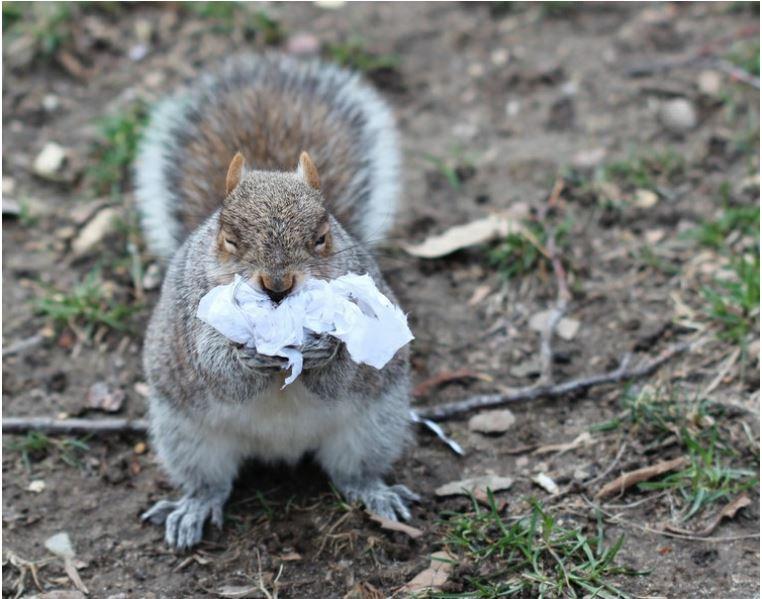 2. Wiewiórki i inne małe zwierzęta zjadają śmieci myląc je z jedzeniem.