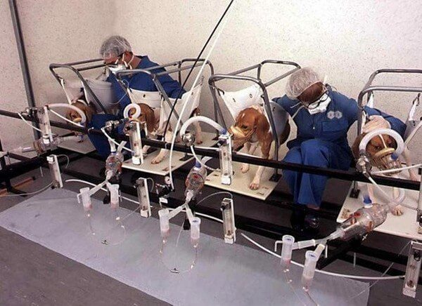 Na kotach, psach i świnkach morskich testuje się różnego typu środki...