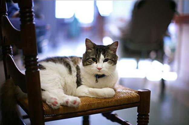 2. To jest Oscar, kot który mieszkał w domu spokojnej starości. Za każdym...