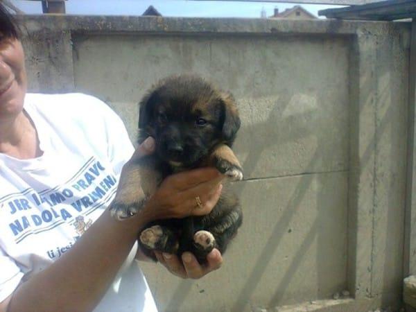 Vasena zabrała wszystkie psy do domu i otoczyła je opieka, której bardzo...