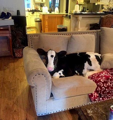 Goliat ma swoje ulubione miejsce na sofie (ciekawe, co zrobi, gdy z niej wyrośni