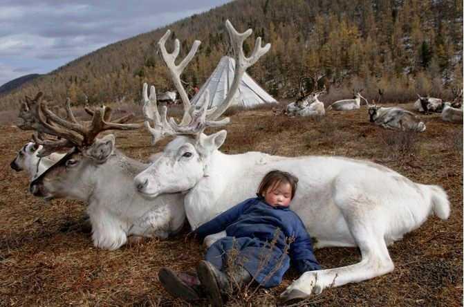 Niemniej, ich ukochanymi zwierzętami są właśnie renifery. Durha to...
