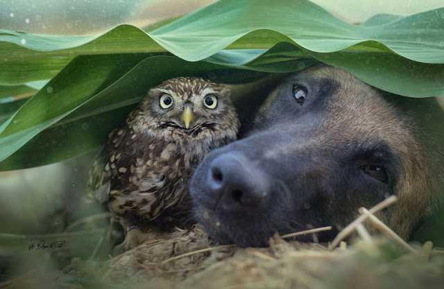 Ingo opiekuje się nią jak na prawdziwego psa policyjnego przystało.