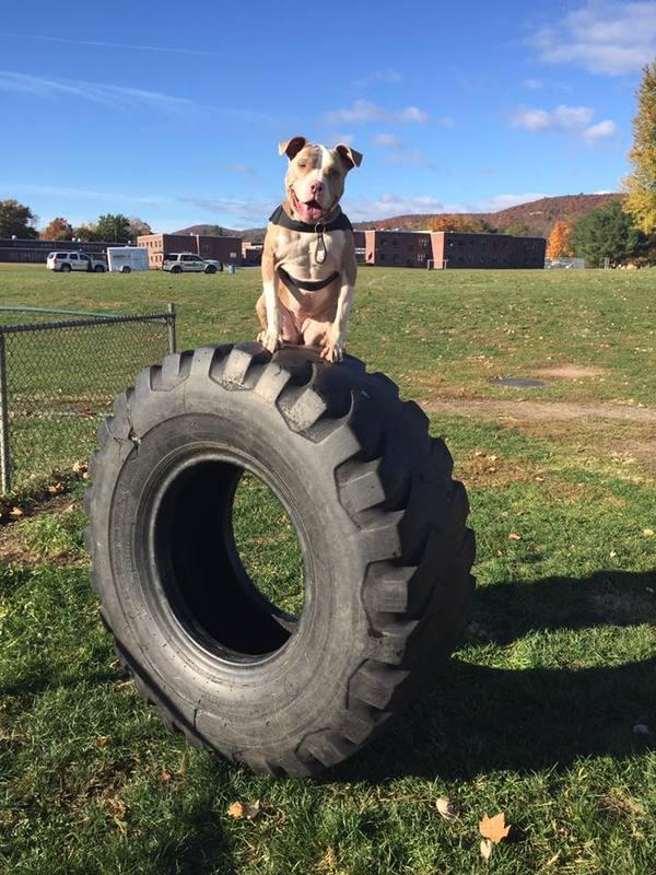 Rezolutna Kiaha przeszła odpowiednie szkolenie i została psem policyjnym :)...