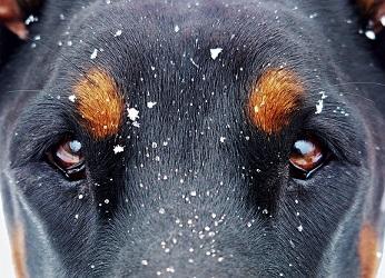 Dla psów to nieoceniona pomoc, dzięki której mogą przeżyć zimę. Pamiętajmy,...