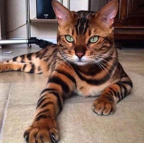 Ten piękny kociak ma tysiące fanów na Facebooku i Instagramie, a nas to wcale...