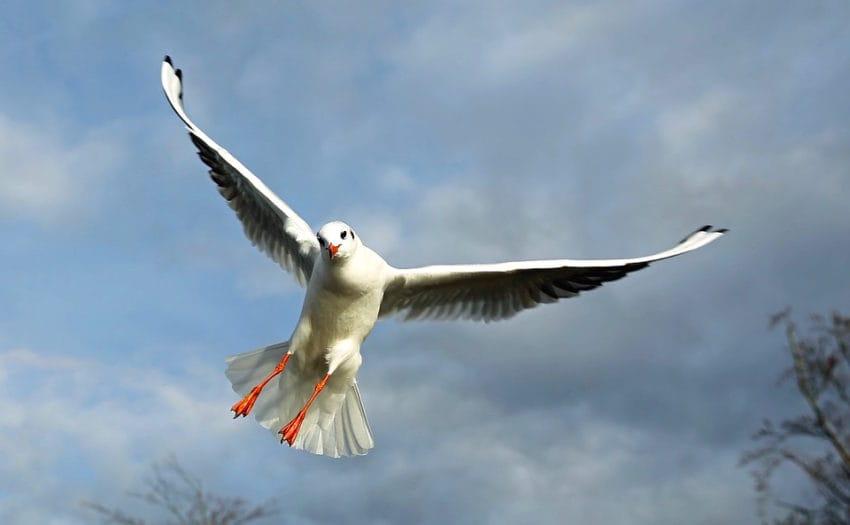 <b>3. Śpiew ptaków ucicha</b><br><br> Ptaki stają się bardziej aktywne...