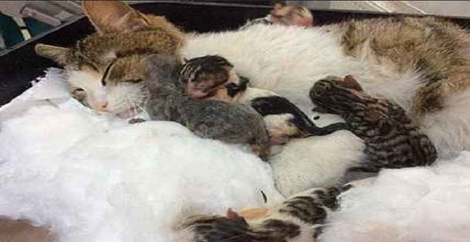 Bez pomocy ludzi poród mógł się bardzo źle skończyć zarówno dla kotki, jak i dla
