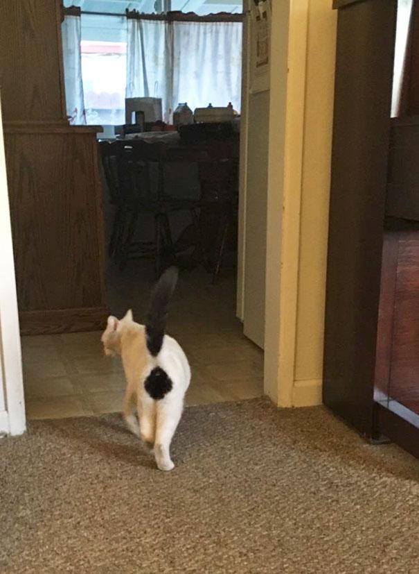 3. Przejdźcie na następną stronę, by zobaczyć nietypowego kotka...