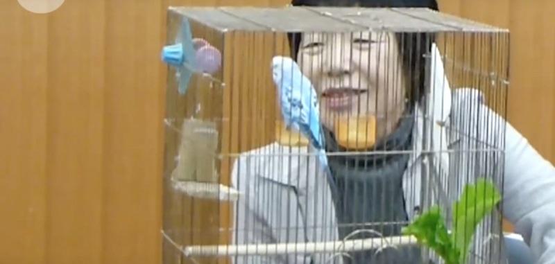 Właścicielka papugi, przyzwyczajona do jej ucieczek, na wszelki wypadek nauczyła