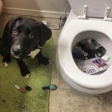 Chyba uznał, że jego pani ma za dużo kosmetyków i chciał posprzątać. To się...