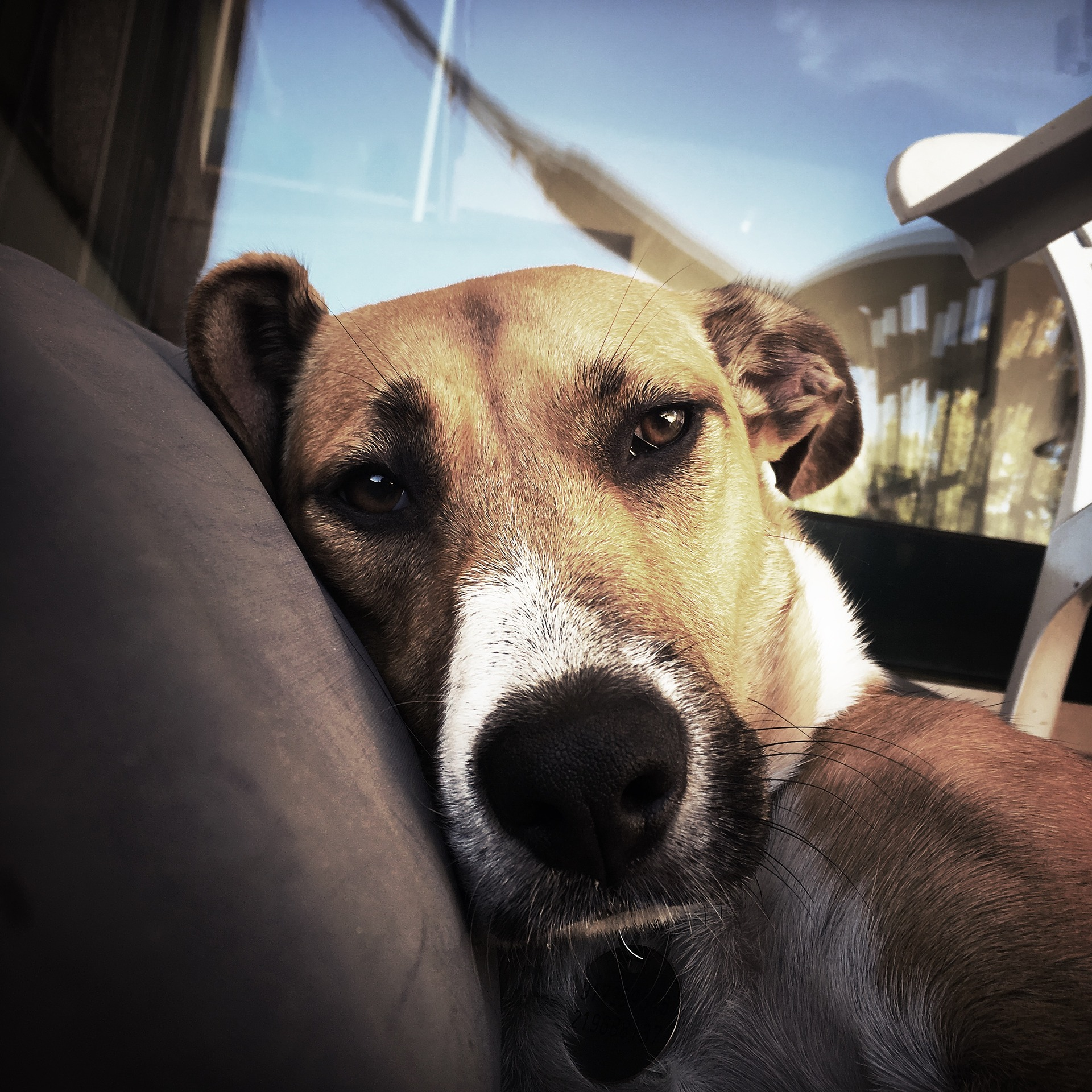 Właściciele psów powinni zadbać, by ich pupil był wybiegany i zmęczony.<b>...