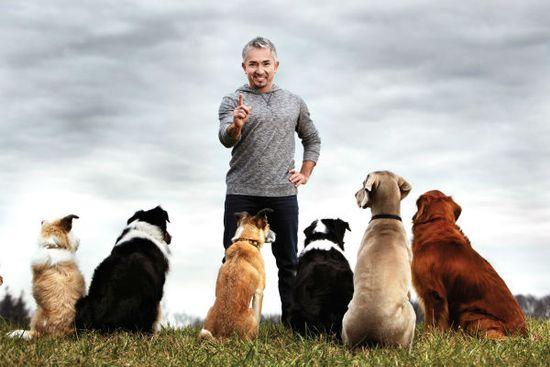 Pozytywna kara polega na ukaraniu psa tak, by ten nie połączył tego z celową...