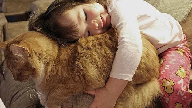 Kot przytulak