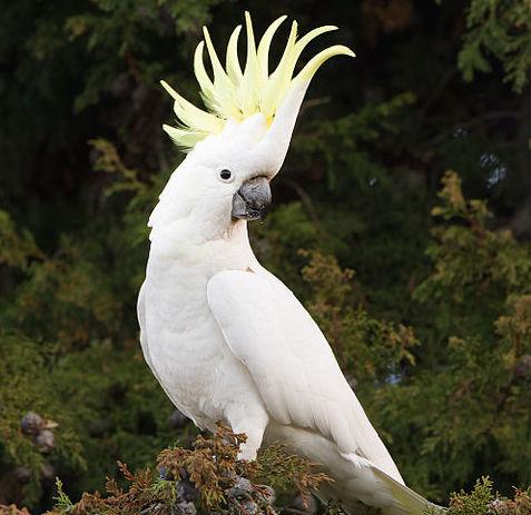 Te piękne ptaki żyją ponad 50 lat i zapewne na zawsze zapamiętają...