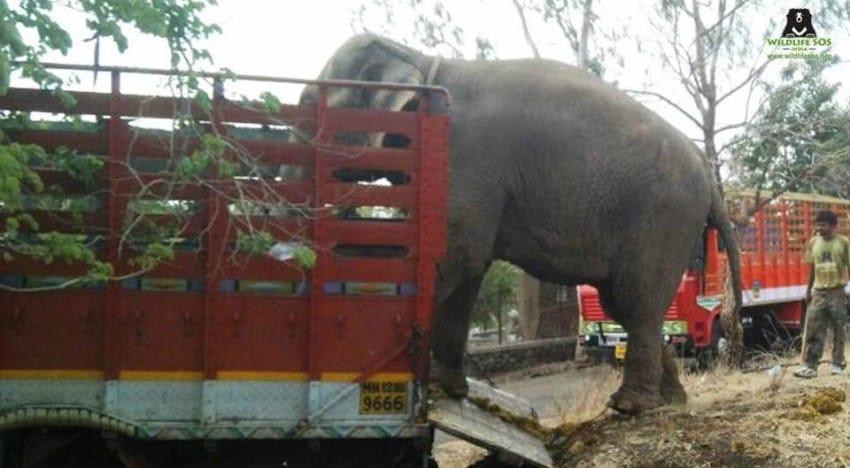 Nie wszyscy uważali, że odebranie słoni właścicielom jest słuszne i wyrazili...