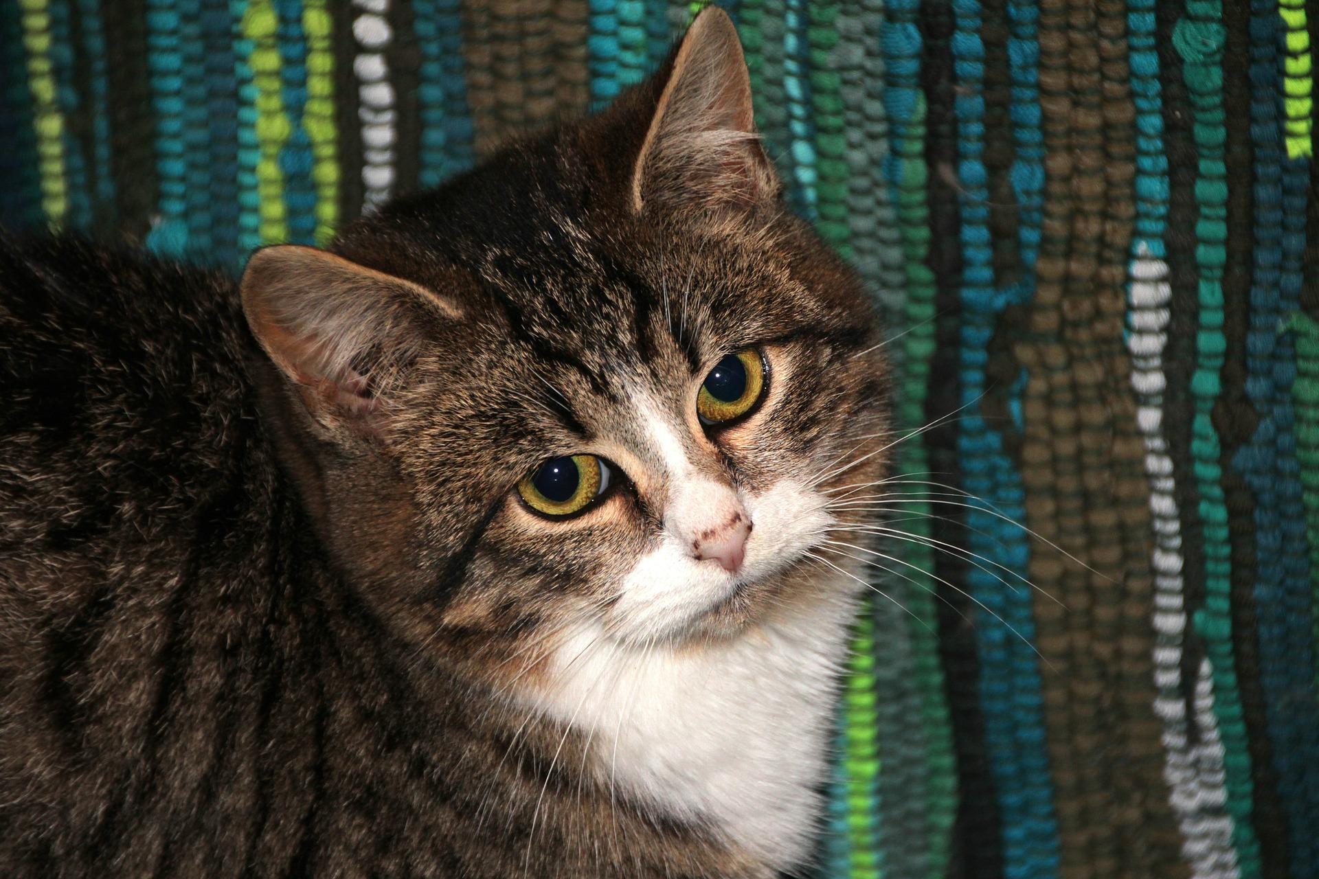 Pamiętajmy, że<b> nie tylko koty i psy reagują strachem na huk. Podobnie ma...
