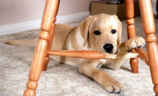 Istnieje też tzw. negatywna kara, która polega na odebraniu psu czegoś, na...
