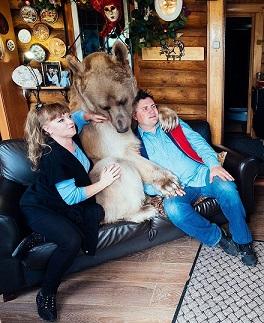Niedźwiedź uwielbia spędzać czas w towarzystwie swoich właścicieli...