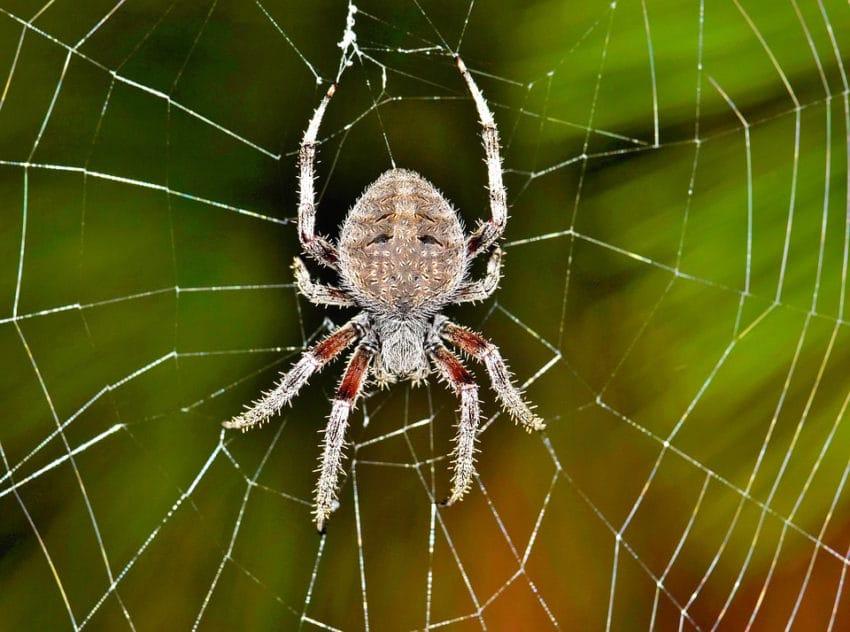<b>6. Pająki niszczą własne pajęczyny</b><br><br> Pająki niszczą swoje domu,...