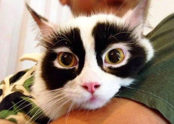6. Kolejny kot zaskoczy Was!