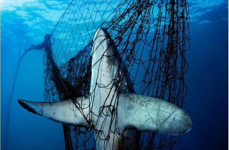 6. Sieci rybackie stanowią olbrzymie zagrożenie! <br><br> Więcej poruszających