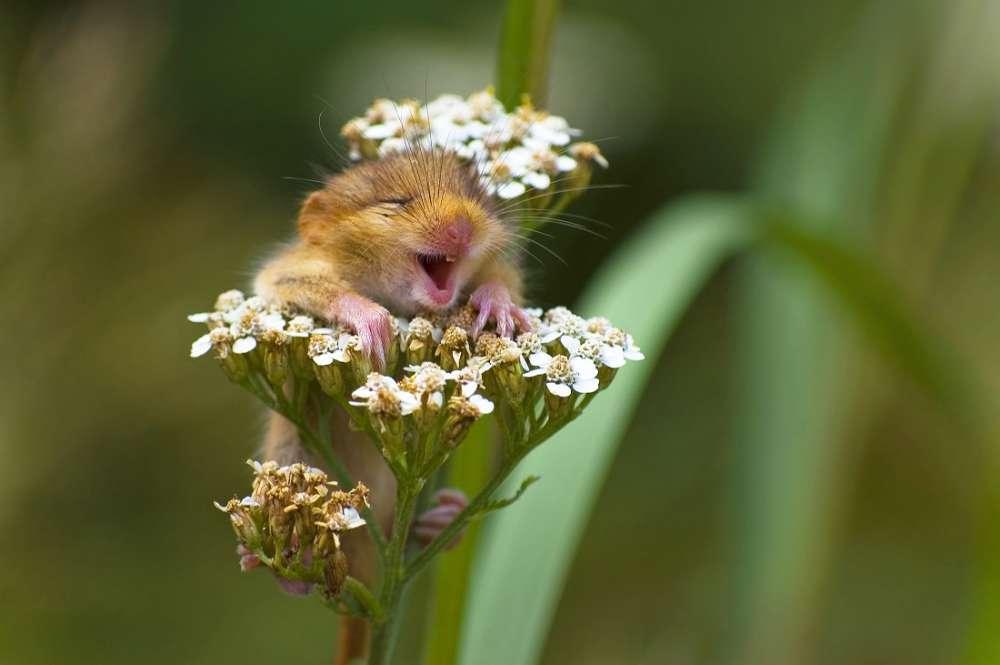 6. Jeden kwiatek, a ile radości! :) <br><br> Na kolejnej stronie znajdziecie wi