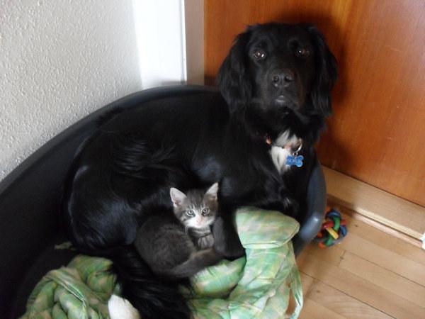 Kocięta które nie boją się kochać innych ras