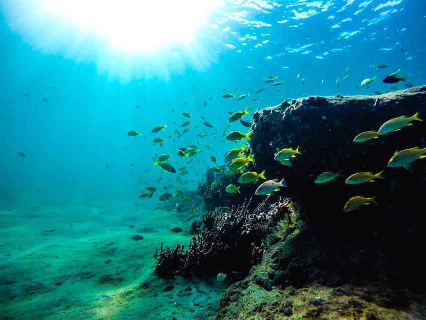 <b>7. Ryby szukają schronienia</b><br><br> Nurkowie, którzy akurat byli pod...